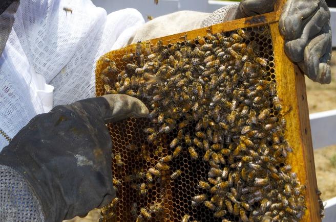 honey-108997_1280